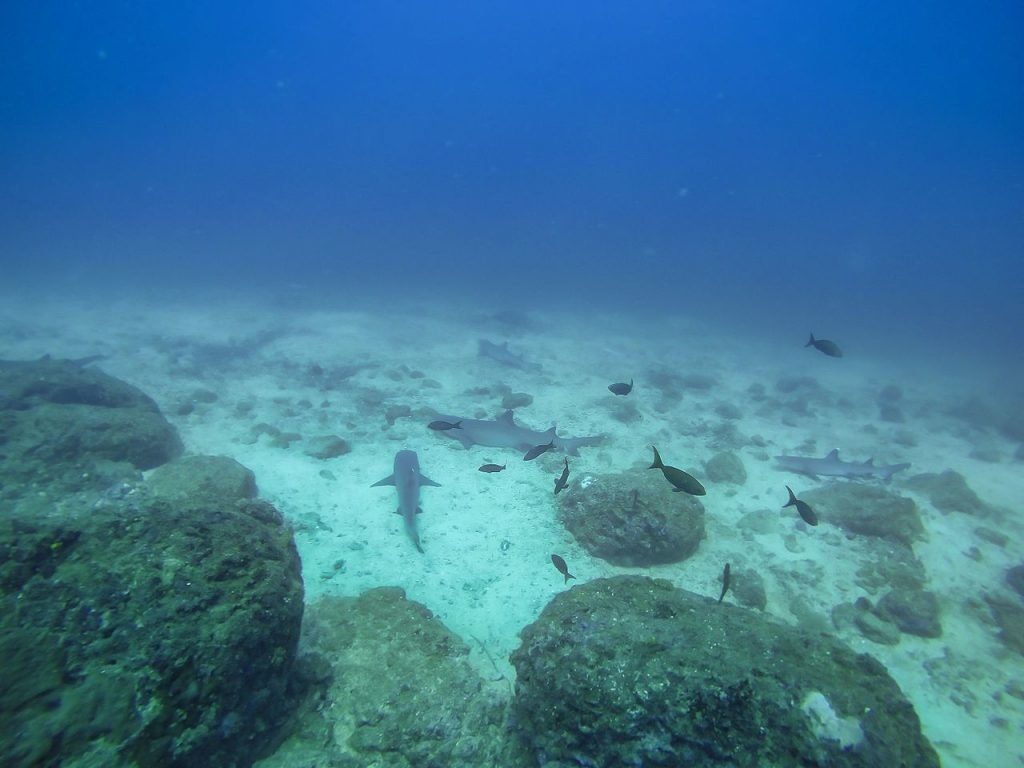 Diving with sharks in Coiba