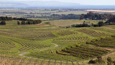 Weingebiet in Australien
