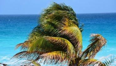 Surfen vor Palmenstränden
