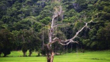 Regenzeit in Mittelamerika