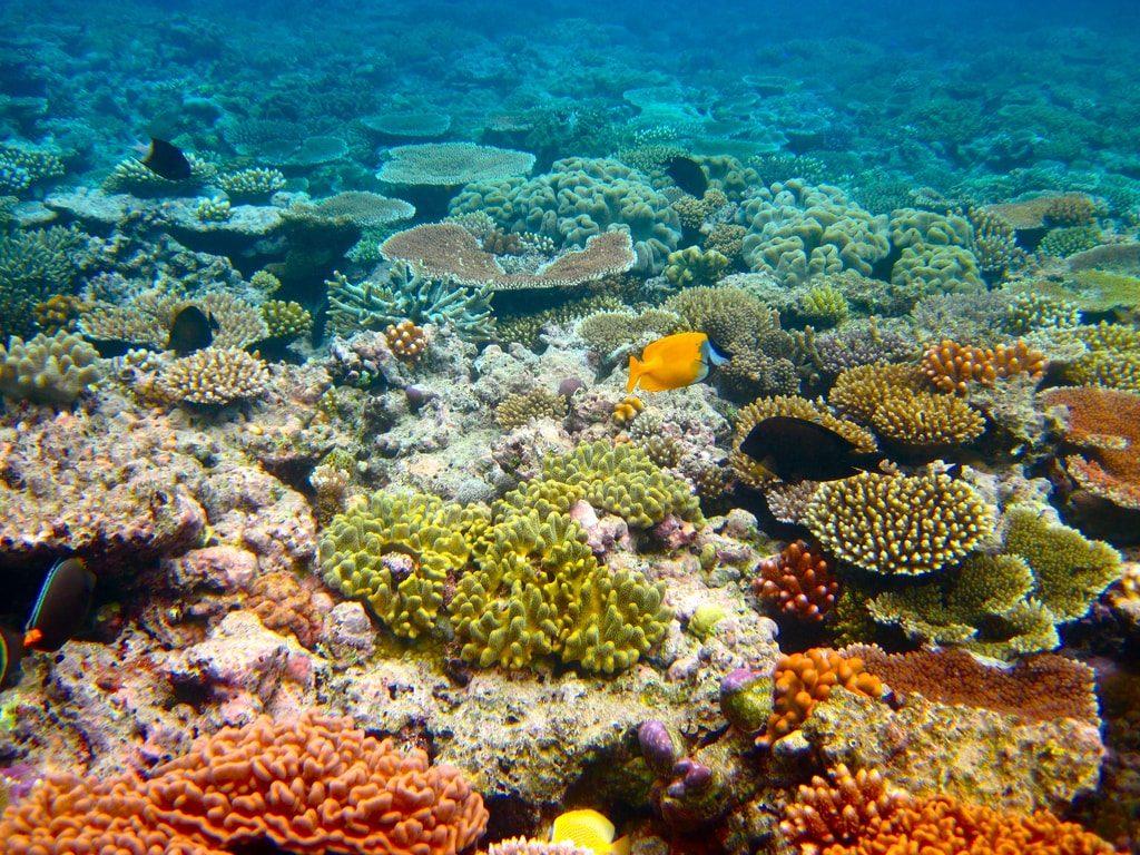 Buntes Great Barrier Reef