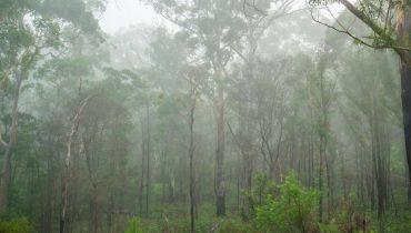 Tropisches Australien