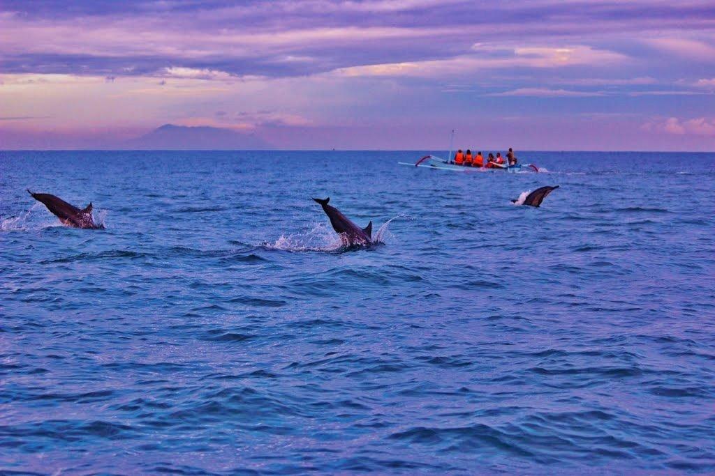 Delfine beobachten in Lovina
