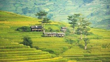 Famous Rice Terraces near Surf Camp Bali