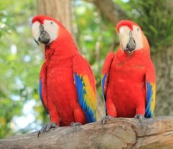 Colorful Parrots
